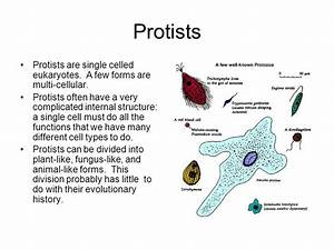 Protists Protists Are Single Celled Eukaryotes  A Few