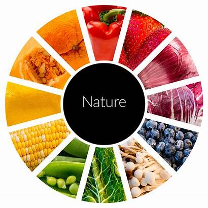 Clipart Wheel Fruit Nutrition Healthy Foodandhealth