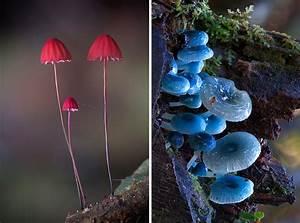 Radically diverse australian fungi photographed by steve for Radically diverse australian fungi photographed by steve axford