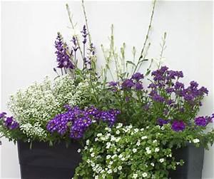 Balkon Gestaltungsideen Pflanzen : garten gestaltung mit blauen balkonpflanzen ~ Lizthompson.info Haus und Dekorationen