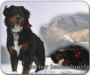 Berner Sennenhund Gewicht : 4pfotenshop hundewarnschilder und kratzfeste autoaufkleber mit hundemotiven fototasse ~ Markanthonyermac.com Haus und Dekorationen