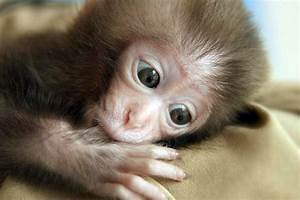 Best Cute Stuff: Cute Monkey