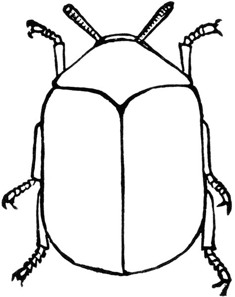 beetle clipart black and white beetle clipart etc