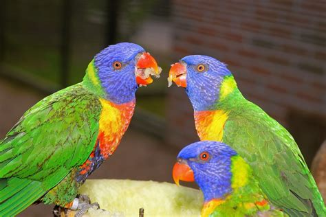 10 Popular Bird Breeds That Make Great Pets
