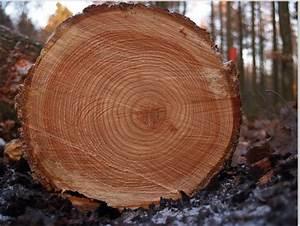 Cambridge University Scientists Create Ancient Tree Ring
