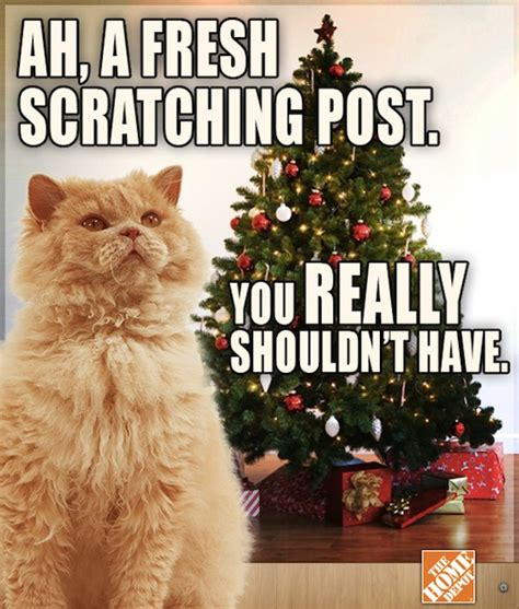 Christmas Cat Meme - a grumpy cat complains about the holiday season designtaxi com