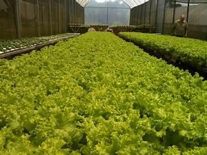 Hidroponia, el cultivo del futuro Blogs lanacion
