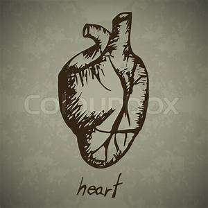 Human Heart Hand Drawn Outline Artwork  Vector Eps10