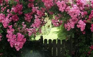 Wann Geranien Pflanzen : wann rosen pflanzen rosen pflanzen rosen pflanzen ~ Lizthompson.info Haus und Dekorationen