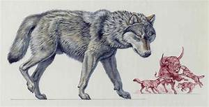 Dire Wolf Size Compared To Grey Wolf