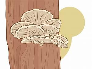Comment Cultiver Des Champignons : comment cultiver des champignons en int rieur wikihow ~ Melissatoandfro.com Idées de Décoration