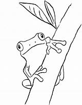 Frog Coloring Frogs Tree Printable Drawing Printables Drawings Clip Outline Eye Animals Rainforest Realistic Eyed Getdrawings Sheets Getcolorings Drawn Samanthasbell sketch template