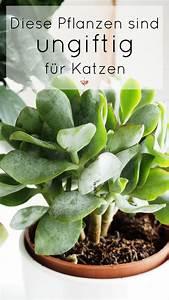 Welche Pflanzen Sind Für Hunde Giftig : die besten 25 ungiftige pflanzen f r katzen ideen auf pinterest pflanzen gegen katzen ~ Watch28wear.com Haus und Dekorationen