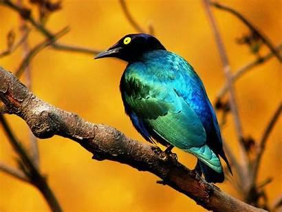 Birds Desktop Wallpapers Bird Amazing Animals Wild