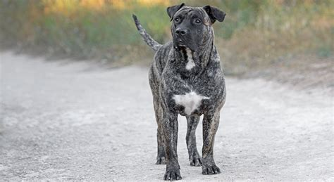 Generally home insurance covers a homeowner's liability for dog bites. Taking a Bite out of Homeowners Insurance Dog Breed Restrictions