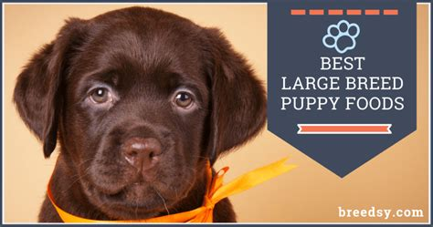 large breed puppy foods    affordable