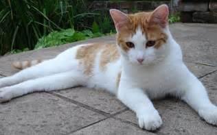Pets Cat Kittens