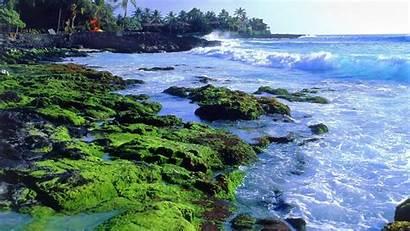 Kona Island 1366 Close