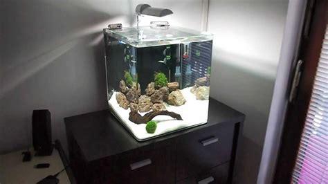aquarium cube 200 l freshwater nano cube aquarium day 13