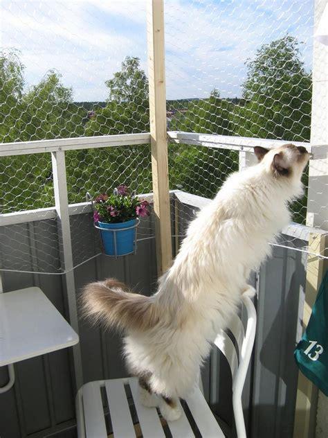 balkon sichern katze gesicherter balkon f 252 r katzen kaninchendraht cats