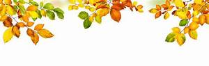 Panoramic Green Leaves On White Background Stock ...