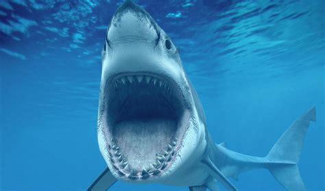 das ist der grund dafuer warum du niemals einen weissen hai