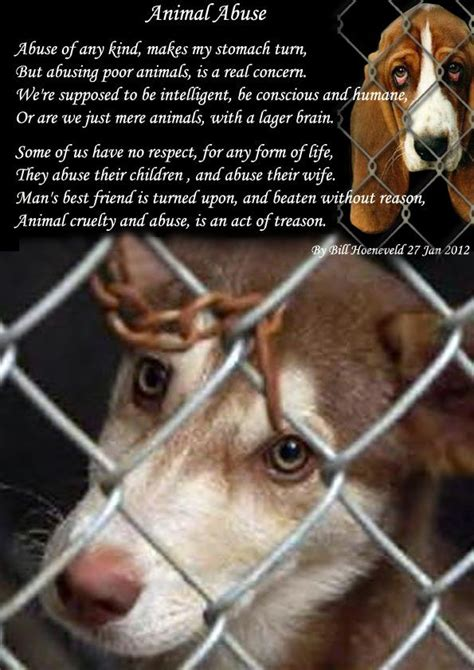 images  stop animal abuse  pinterest cars
