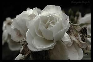 Trauer Blumen Bilder : spd gemeindeverband nordstemmen die zukunft nordstemmens gemeinsam gestalten trauer um erich ~ Frokenaadalensverden.com Haus und Dekorationen