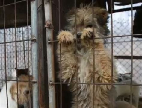dogs rescued  dog meat farm  south korea life