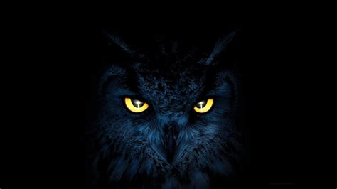 Black Owl Wallpapers by Owl With Yellow Hd Wallpaper Background Image