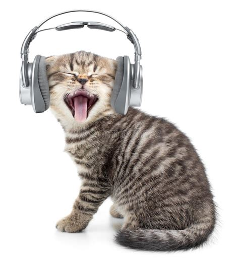 singing funny cat  kitten  headphones stock photo