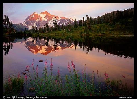 picturephoto fireweed flowers lake  mountain