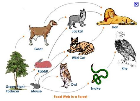 cuisine web matthew 203 food chains and food webs