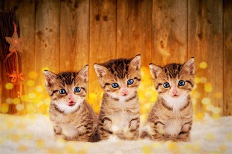 wie alt werden kois wie alt werden katzen heimarbeit de