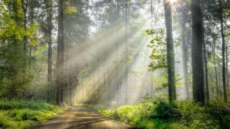 arboles rayos del sol fondos de pantalla hd fondos de