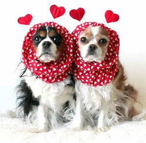 Cute Valentines Day Dogs These Too To Handle Valentine S ...