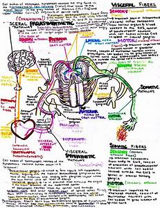 Insta Anatomy   Photo