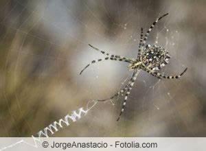 Mittel Gegen Spinnen Im Haus : wirksame mittel gegen spinnen im haus und auf dem balkon ~ Buech-reservation.com Haus und Dekorationen