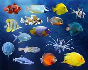 Fische Aquarium Hamburg : wie lohnenswert sind aquarium online shops netzsieger ~ Lizthompson.info Haus und Dekorationen