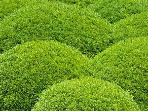 Garten Im Mai : gartentipps das ist im mai zu tun ~ Markanthonyermac.com Haus und Dekorationen