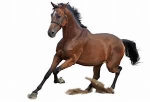 Darmsanierung pferd
