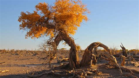 Landscape Desert Trees Wallpapers Hd Desktop And