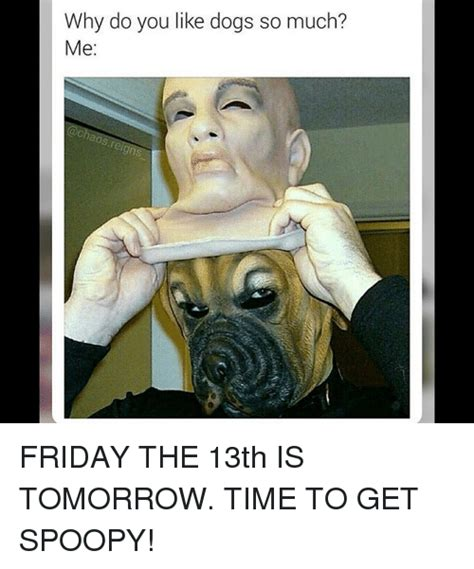 why do puggles shed so much why do dogs so much 28 images 25 best memes about time