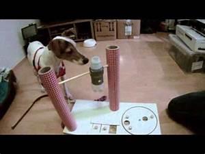 Hunde Intelligenzspielzeug Selber Machen : intelligenzspielzeug f r hunde teil 2 youtube ~ A.2002-acura-tl-radio.info Haus und Dekorationen