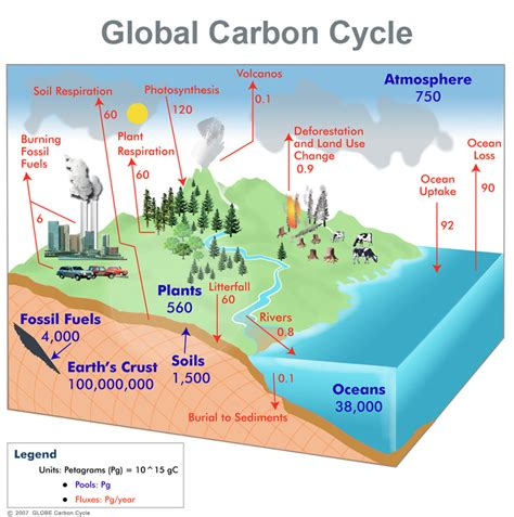 global carbon cycle simcenter www wrsc org
