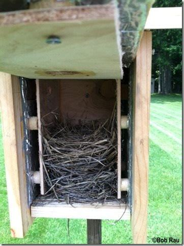 bluebird house plans  nestlings cool