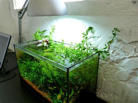 forum gt message gt plante plantes ikea aquabase org