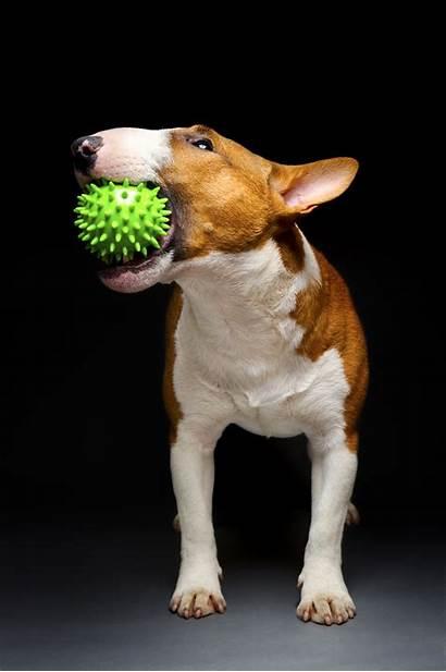 Dog Stuff Cool Items Must Things Behavior