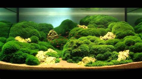 Aquascape Moss by Indoor Water Garden Inspiration Aquascape