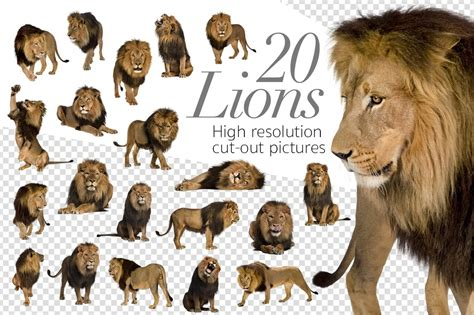 lions cut  high res pictures graphic objects